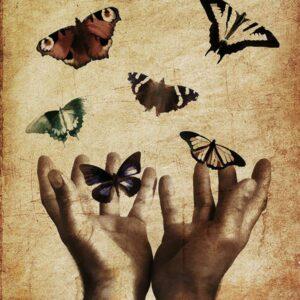 butterflies-600.jpg
